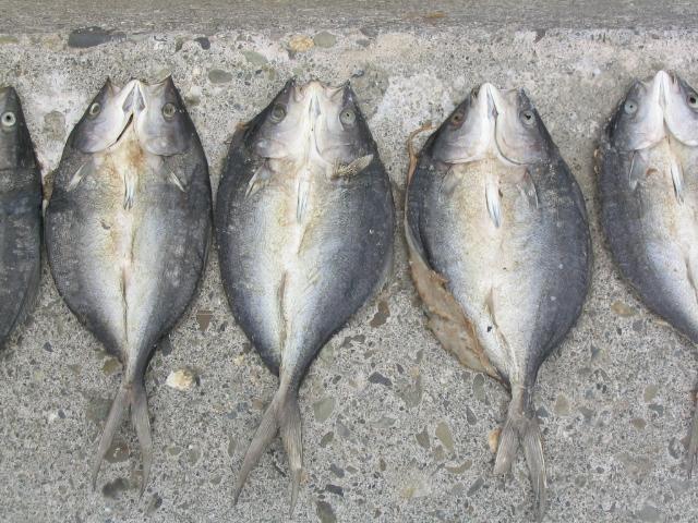 fishhalves