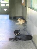 Dogdayafternoon