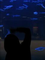 Finandfish